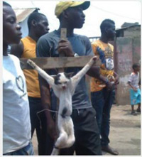 Muslims crucify cat